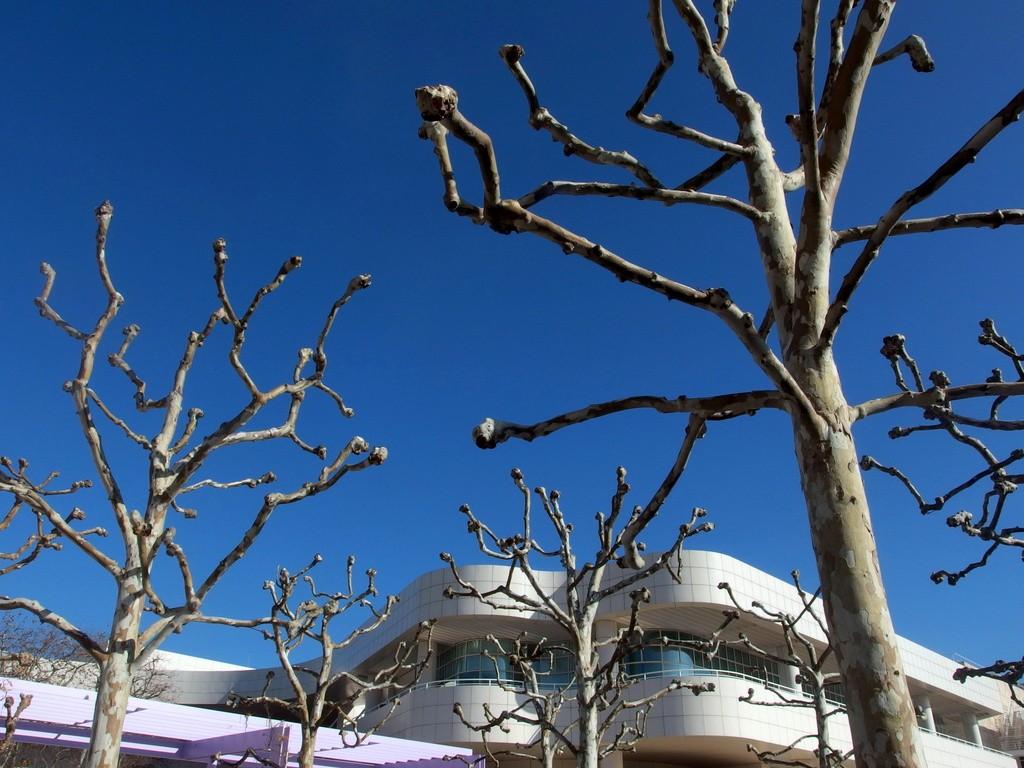 Centrum Gette'ego graficzne drzewa by Dorota Kunecka