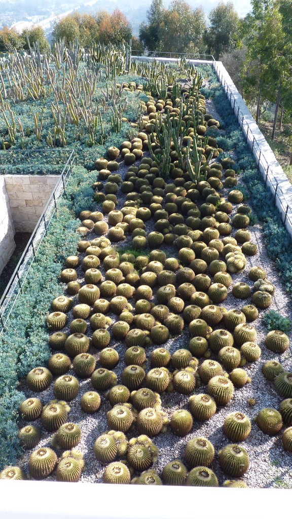 Centrum Gette'ego cypel kaktusów by Dorota Kunecka
